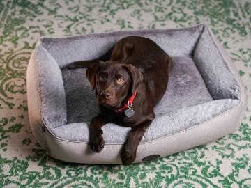 Мягкий лежак для собаки sofa wolf mocca фото