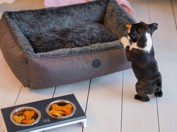 Мягкий лежак для собаки sofa wolf graphite фото