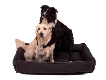 Спальное место для больших собак серое фото