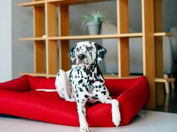 Лежак для собаки sofa red фото