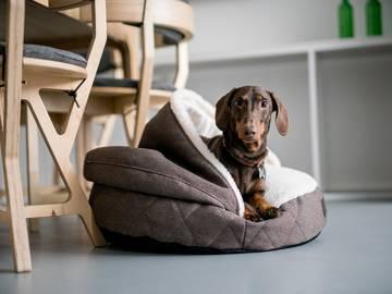 Мягкие домики для собак без деревянного каркаса по цене 0 грн.