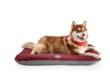 Понтон для собак фото