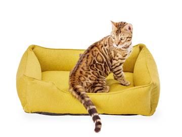 Лежанка для кота фото