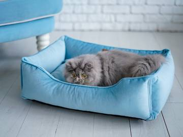 Спальные места для кошек фото