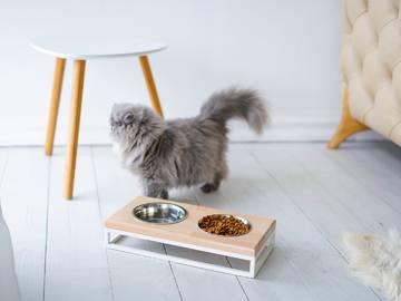 Кормушки для кошек фото