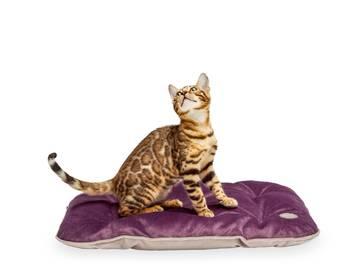 Подстилка для кошки tomas ink без деревянного каркаса по цене 0 грн.