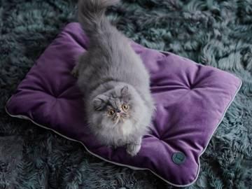 Дом для кошки фото