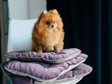 Мобильная подушка для собак ink фото