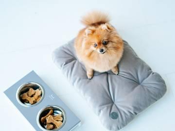 Мобильная подушка для собак grey фото