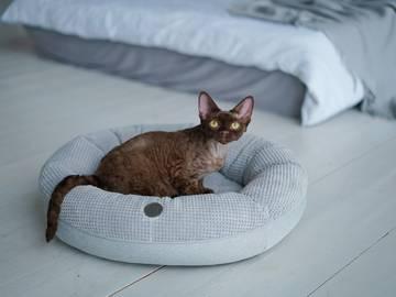 Круглый лежак для кошки фото