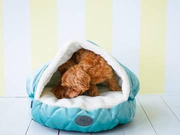 Лежак с капюшоном cover tiffany velur фото