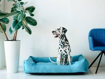 Лежак dreamer blue velvet фото