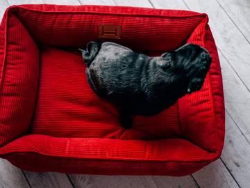 Лежак dreamer red velvet фото