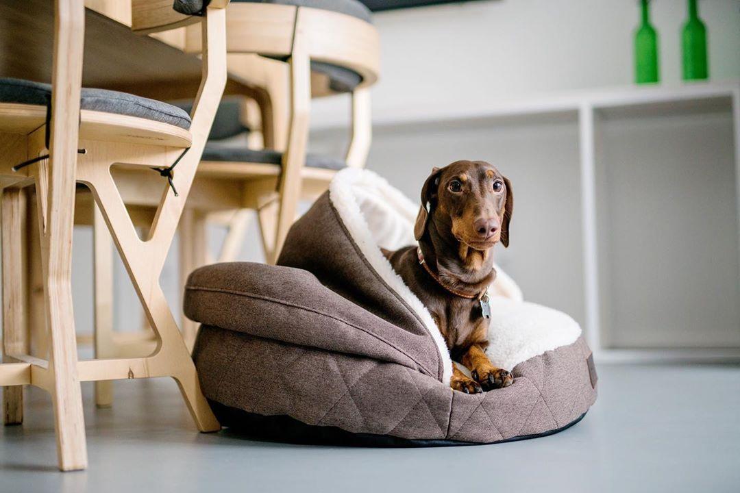 Комфортные условия для собаки: основные рекомендации